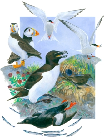 Gulf of Maine Seabirds
